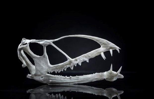 فسیل 210 میلیون ساله نخستین مهره دار پرنده کشف شد