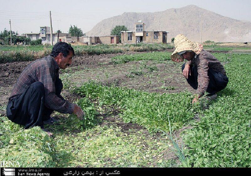 خبرنگاران 5، 5 درصد اراضی حاصلخیز کشاورزی کشور در کرمانشاه قرار گرفته است