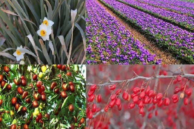 تهیه نقشه راه گیاهان دارویی سرزمین طلا و یاقوت های سرخ، درآمد 2هزار میلیاردی ازکشت گیاهان بومی