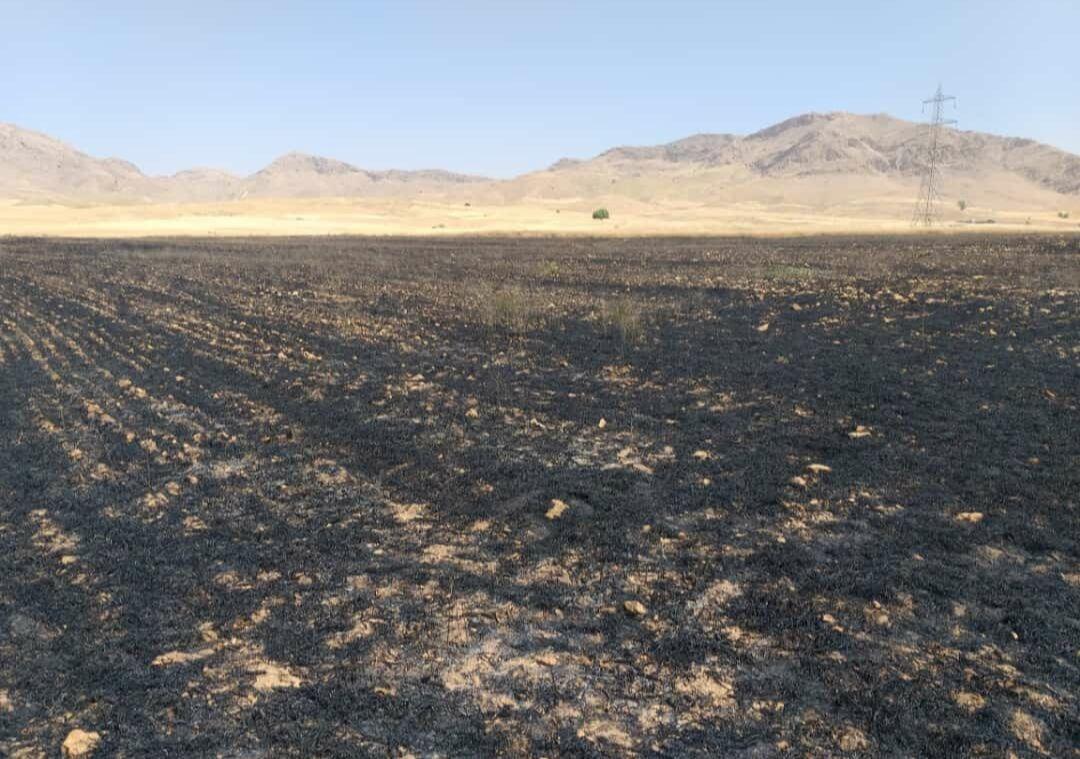 خبرنگاران آتش سوزی در 55 هکتار از مزارع ایذه
