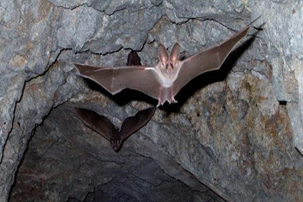 بزرگترین غار خفاش ایران را بشناسید، وجود 25 هزار خفاش در یک مکان