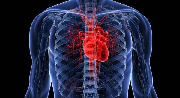 چربی قلب و افزایش خطر مرگ زودرس، حتی در لاغرها!